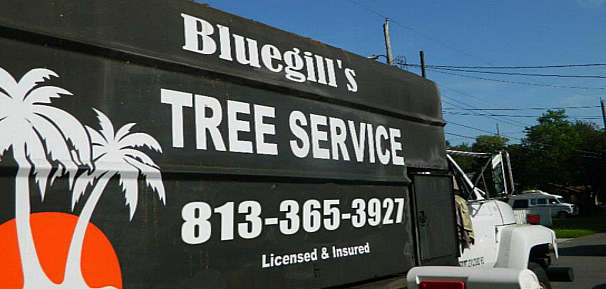 tree trimming Tampa